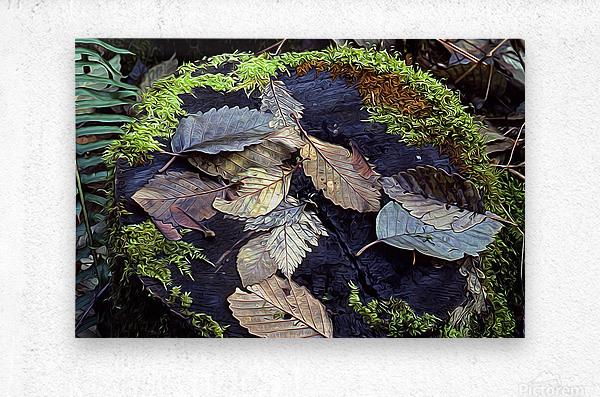 Mossy Stump  Metal print
