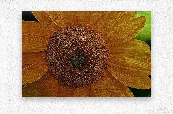 Enhanced Sunflower  Metal print