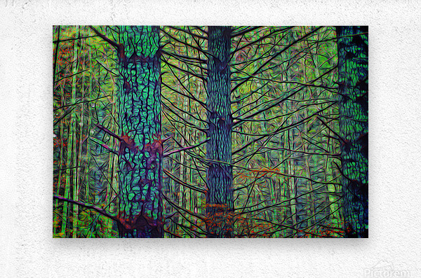 Forest Splendor  Metal print