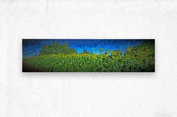 Summer Corn  Metal print