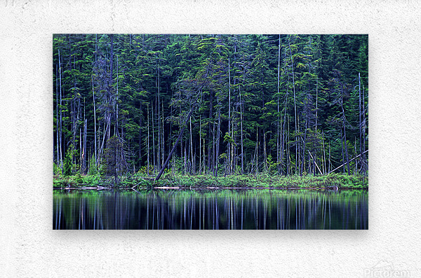 Forest by the Lake  Metal print