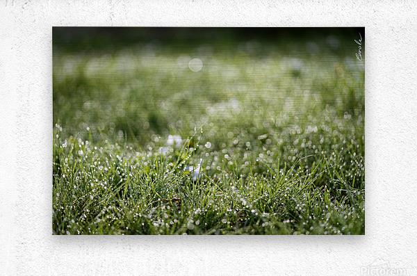 Confettis au jardin 1  Metal print