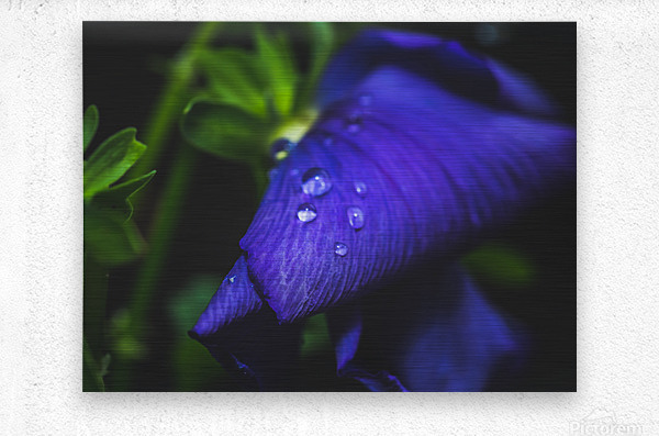 Drops With Blue  Metal print