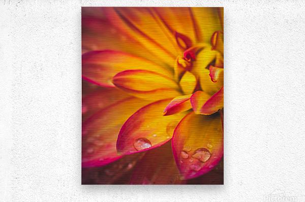 Rain On The Flowers  Metal print