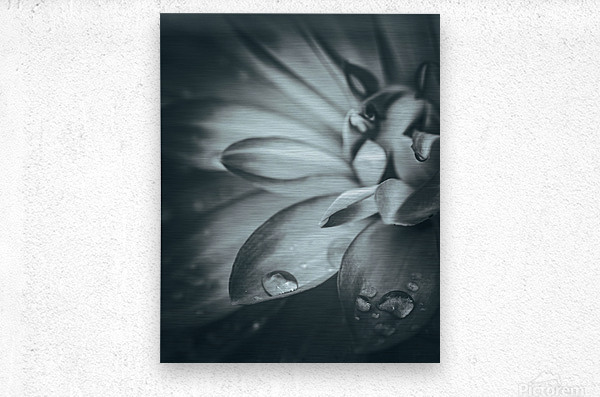 Flowerful Study In A Monochromatic Vibe  Metal print
