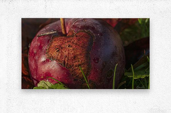 La pomme tatouee - The tattooed apple  Impression metal