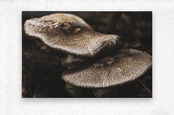 Petit couple au sous bois - Little couple in the underwoods  Metal print