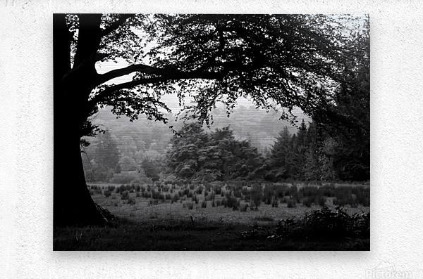 Black and White Field  Metal print