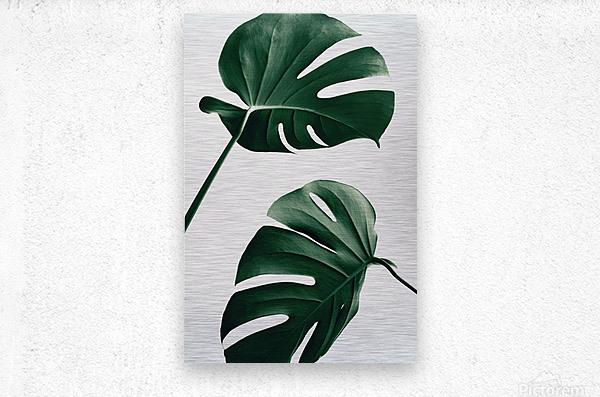 Monstera Natural 46  Metal print