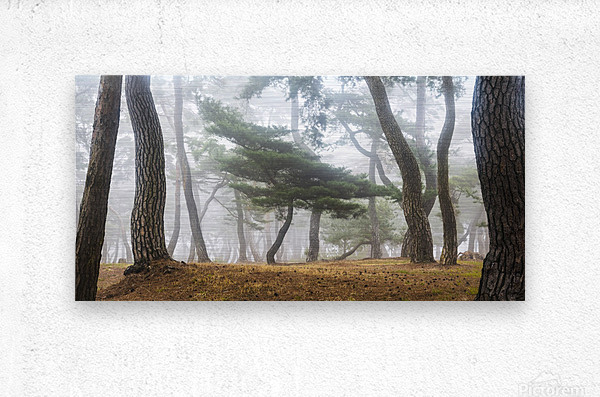 In The Misty Pine Forest  Metal print