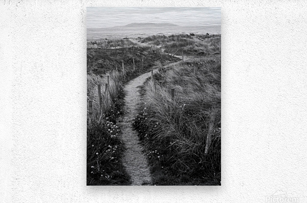 Path to the Sea  Metal print