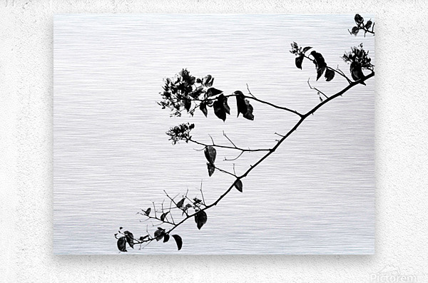 Tree Branch II  Metal print