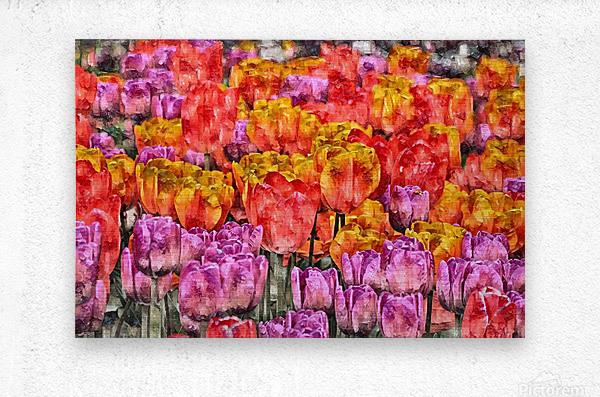 Tulips at Roozengaarde  Metal print