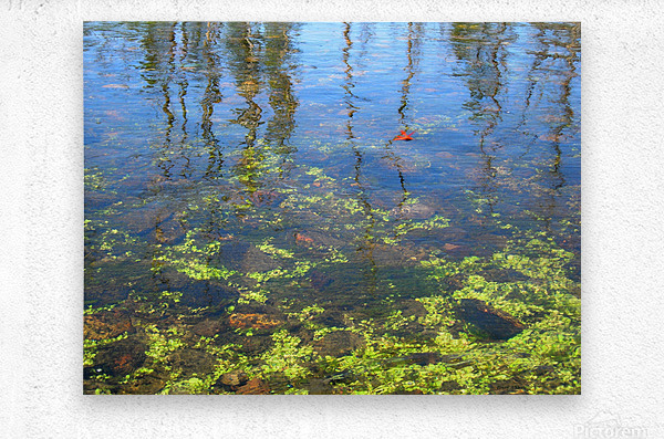 Dragonfly on the Madison  Metal print