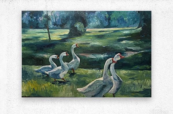 Geese at St. Francisville  Metal print