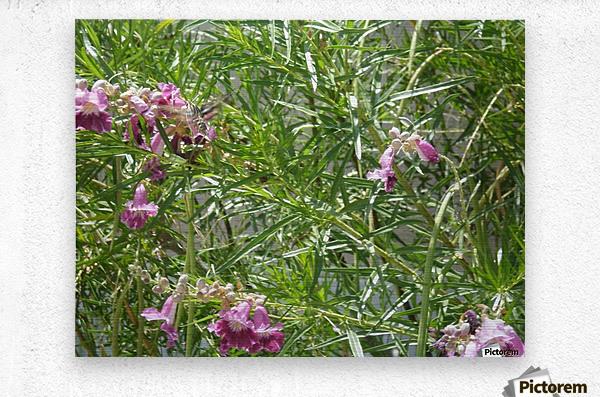 hummingbirdindesertwillow lrg  Metal print