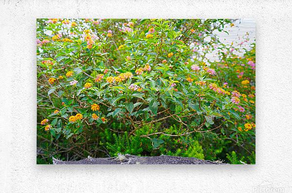 Wild Flowers Waimea Canyon Kauai  Metal print
