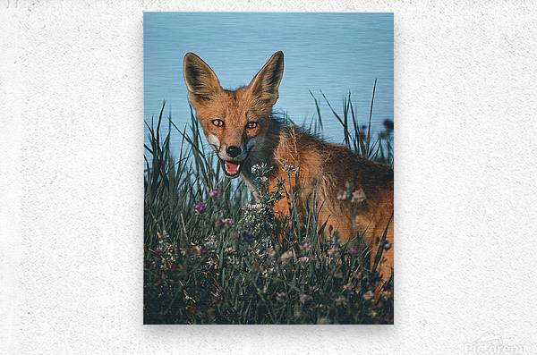 Fantastic Fox   Metal print