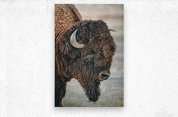 Cut the Bull  Metal print