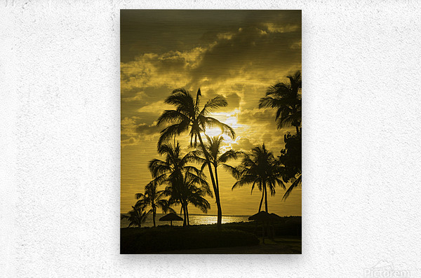 Palms and Hulu Thatched Tiki Umbrellas in the Golden Light of Sunset  Metal print