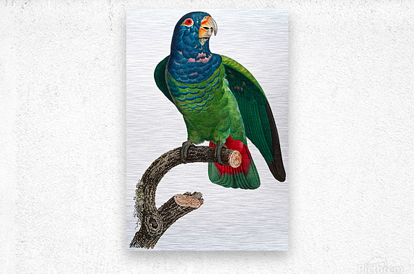 Parrot Print Antique Space Painting Vintage Drawing Poster Wall Art vintage animal parrot photo Tropical Parrot Art   Metal print