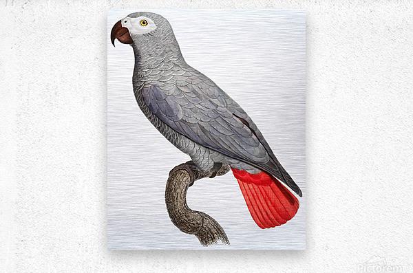 Parrot Print Art Poster with Parrot Parrot Wall Art for Bird Lovers  Metal print