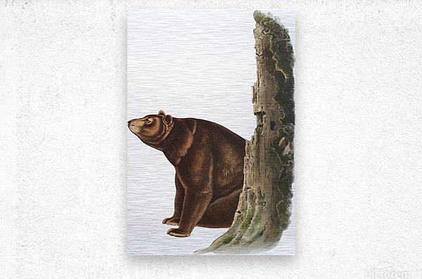 Bear Print  Metal print