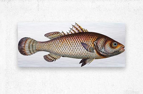 Vintage Fish Wall Art Prints   Metal print
