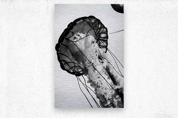 B&W Jelly  Metal print