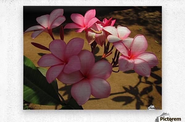 Pink Plumeria 2  Metal print