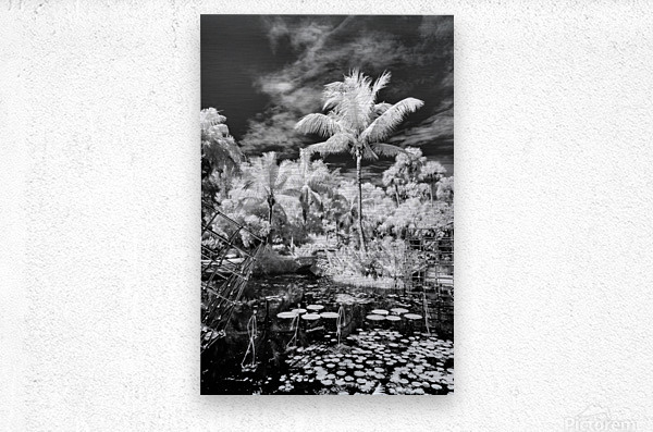 McKee Gardens  Vero Beach  Florida  Metal print