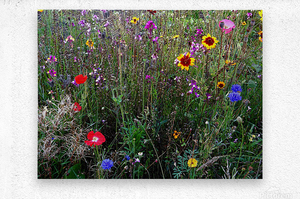 English Cottage Garden Flowers 2  Metal print