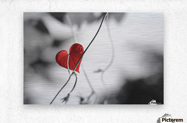 Red heart shaped leaf  Metal print