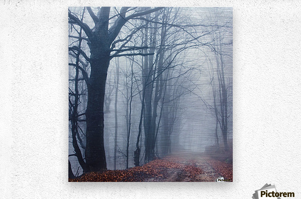 Autumn around us  Metal print