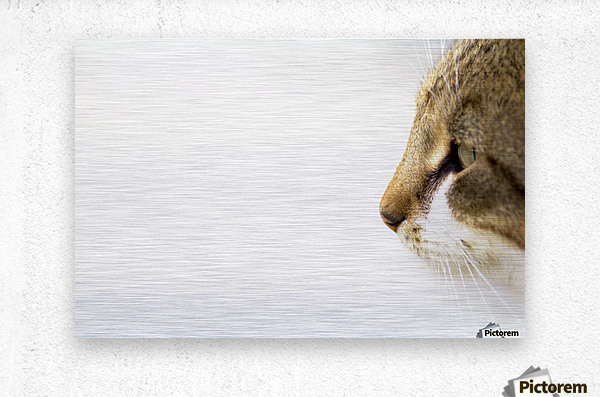 Eyes of prey  Metal print