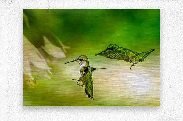 Emerald Hummingbirds  Metal print