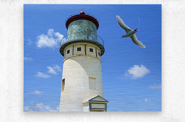 Kilauea Lighthouse and Wildlife Refuge on Kauai  Metal print