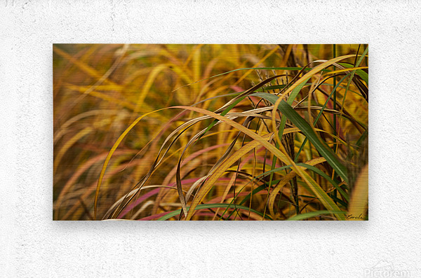 FLAMBOYANTES GRAMINEES NO. 1 - FLAMBOYANT GRASSES NO. 1  Impression metal