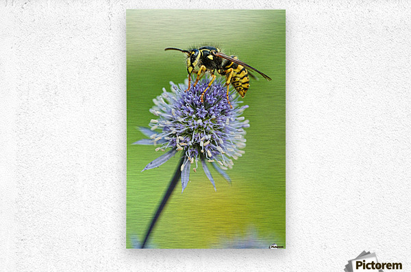 Country Wasp  Metal print