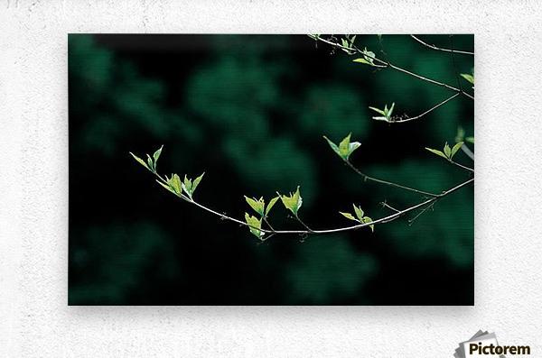 landscape_2_0163  Metal print
