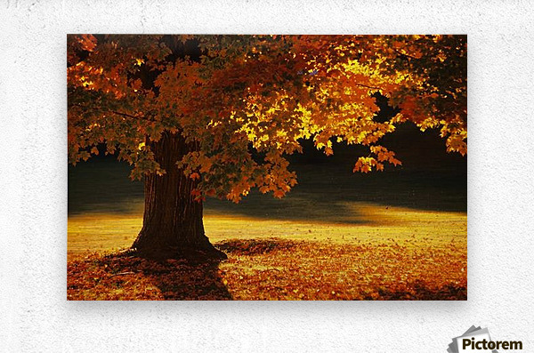 landscape_2_0386  Metal print