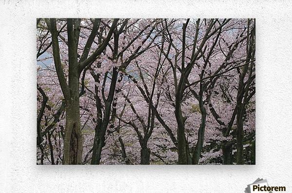 landscape_2_0949  Metal print