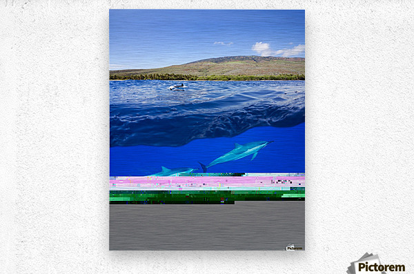 A split view of spinner dolphin (Stenella longirostris) below water and the island of Lanai above; Hawaii, United States of America  Metal print