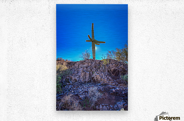 Natures Cross  Metal print
