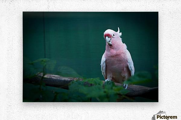 Nature and Birds 14  Metal print
