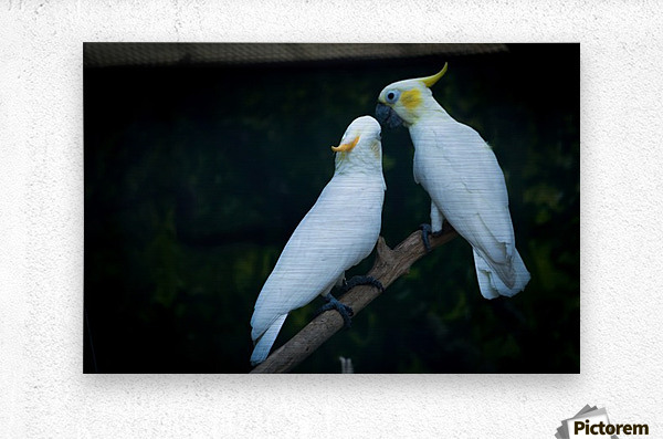 Nature and Birds   15  Metal print