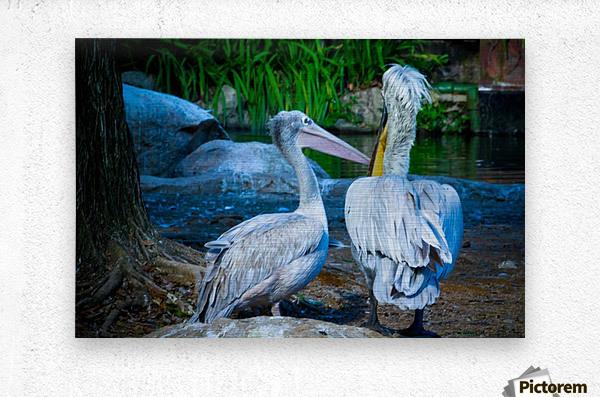Nature and Birds   9  Metal print