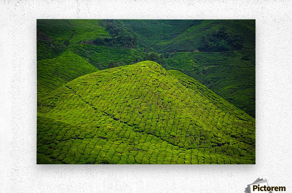 Tea plantations  Metal print