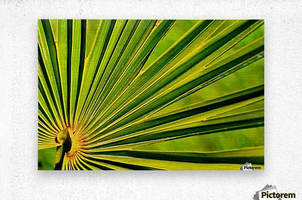 PALM-TREE LEAF 1  Metal print