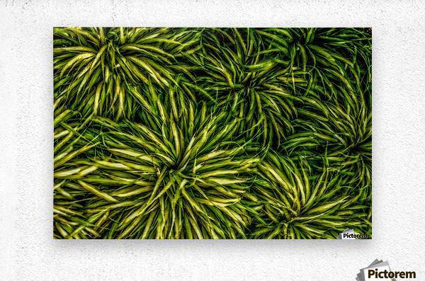 Green Chaos  Metal print